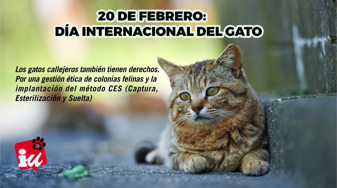 En el #DíaInternacionalDelGato no podíamos faltar los de #LaCueva, cor...