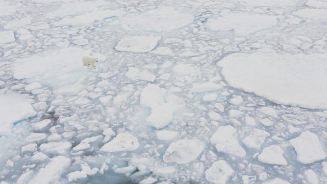 La surface de #banquise des deux pôles au plus bas, depuis le début des mesures, pour janvier #environnement  http:// urlz.fr/4Pt3  &nbsp;  <br>http://pic.twitter.com/VepDIZcSB7