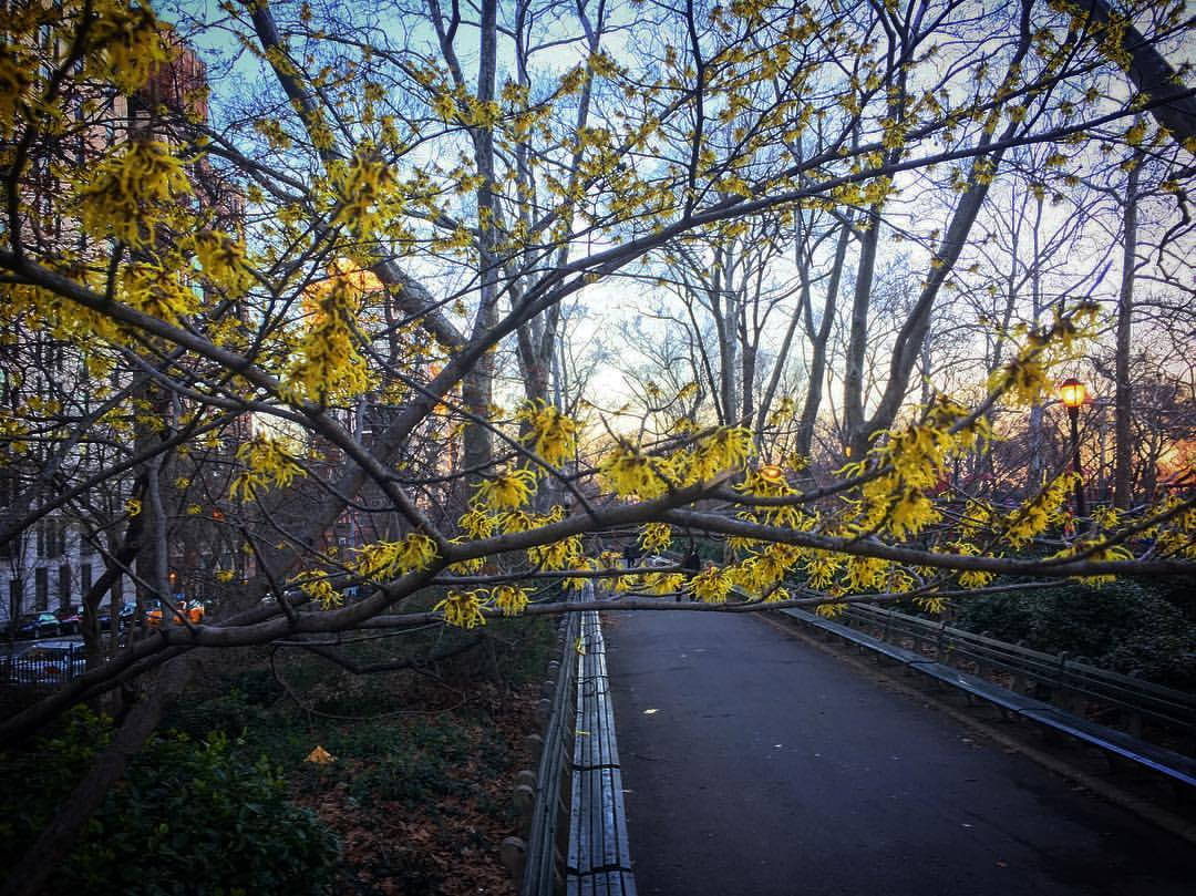 Central Park hit 65 Sunday, one degree short of tying a record. Photo:...