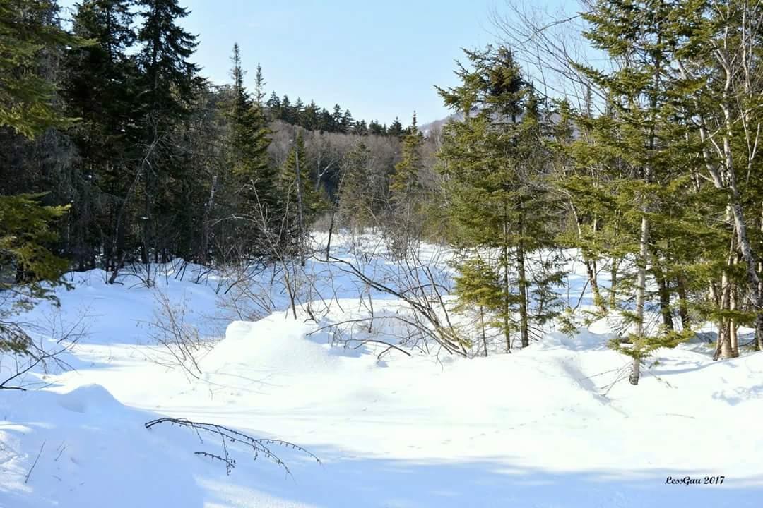 Hier, randonnée pédestre au Marais du Nord  Des paysages brillants dans le soleil...mais le silence règne. Où sont les oiseaux ??? #Québec <br>http://pic.twitter.com/l1ZM7qmNMc