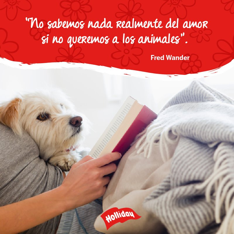 Holliday On Twitter Frases Amor Mascotas Animales Perros