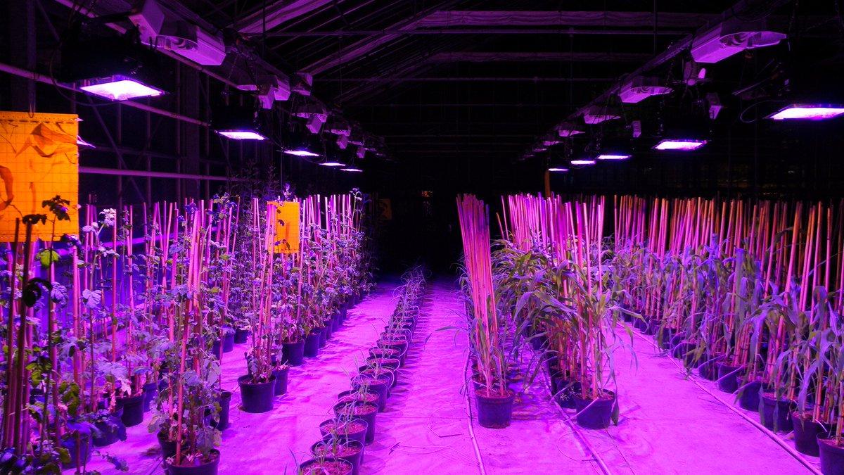 L&#39;institut de #genech éclaire ses cultures avec les lampes #LED multispectrale de @GHK_startup, #innovation 1ère #serre à spectre variable<br>http://pic.twitter.com/mcen3qS6Bf