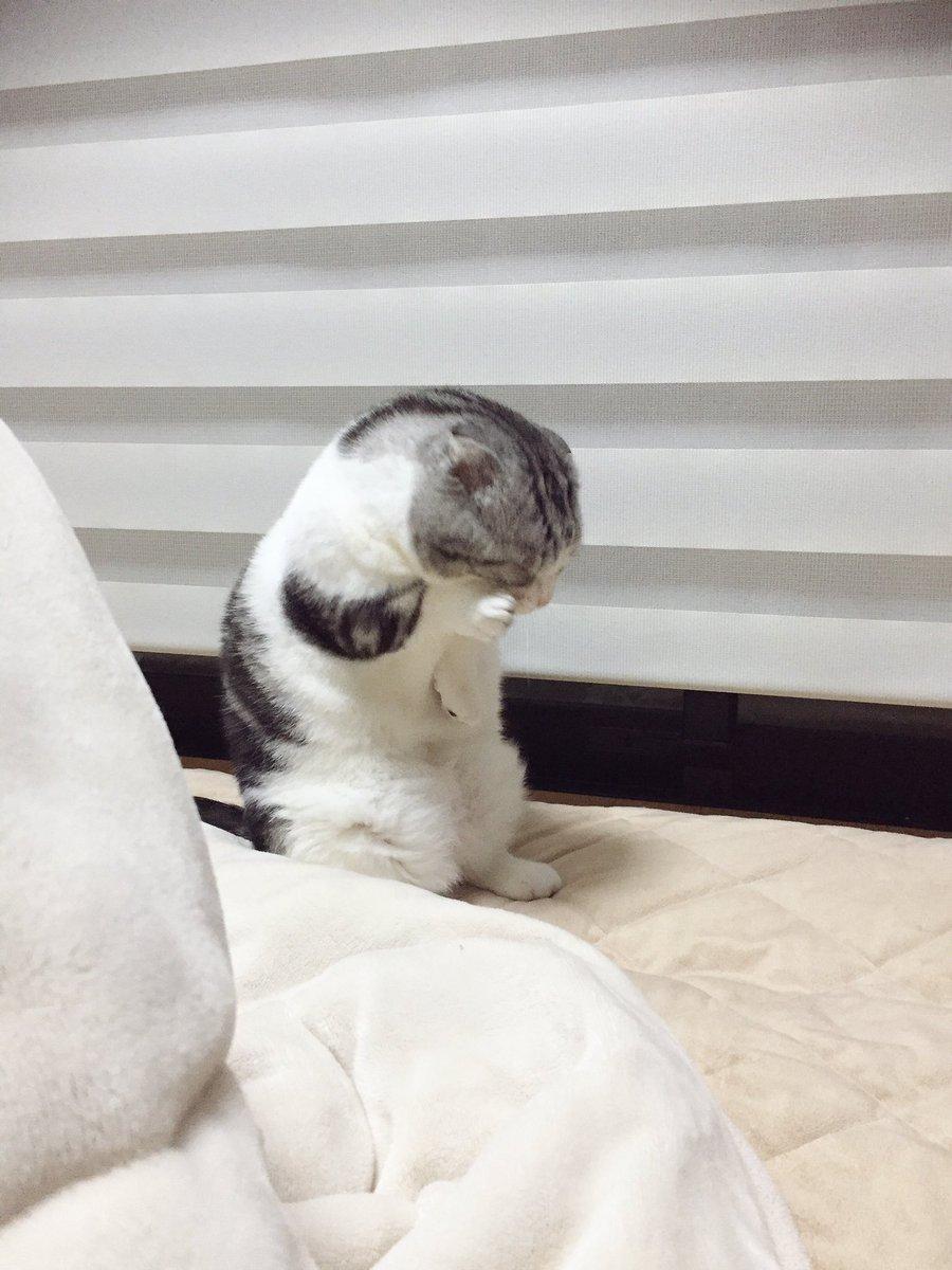 顔洗ってます。「見たな?」 pic.twitter.com/1YbmrAE23i