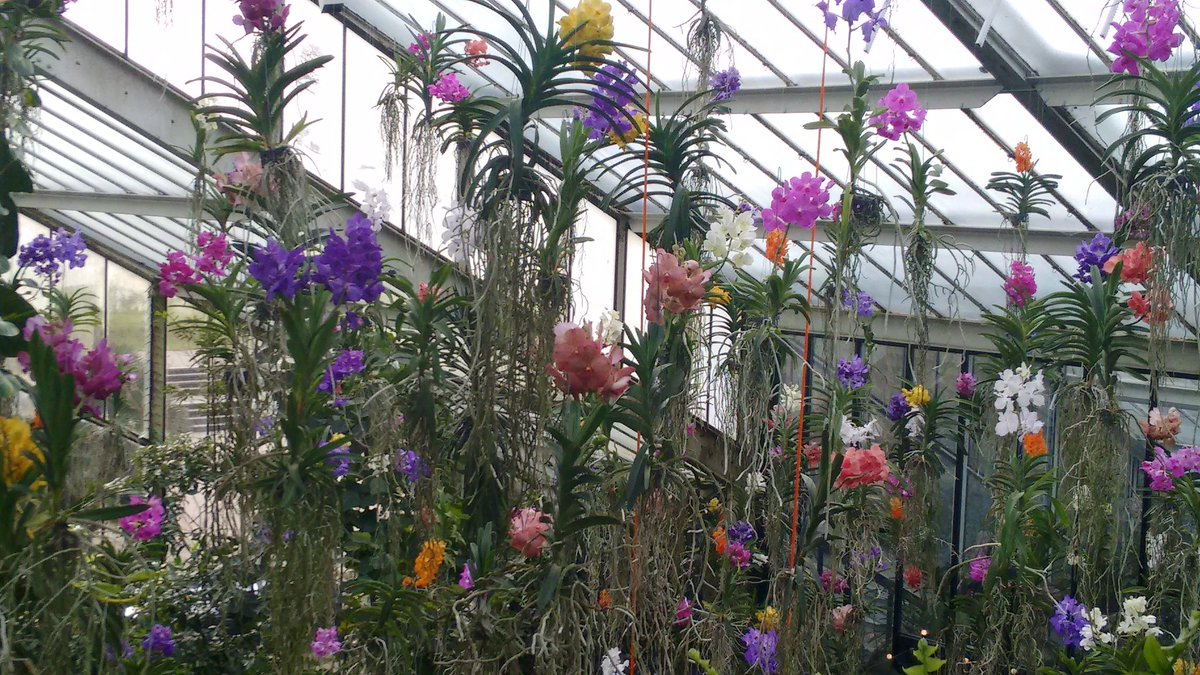 Learn more about the story behind the beautiful Vanda display at #Kew...
