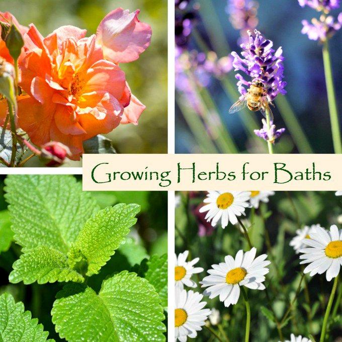 Herbs for Baths: Growing Fresh Herbs for Bath Soaks