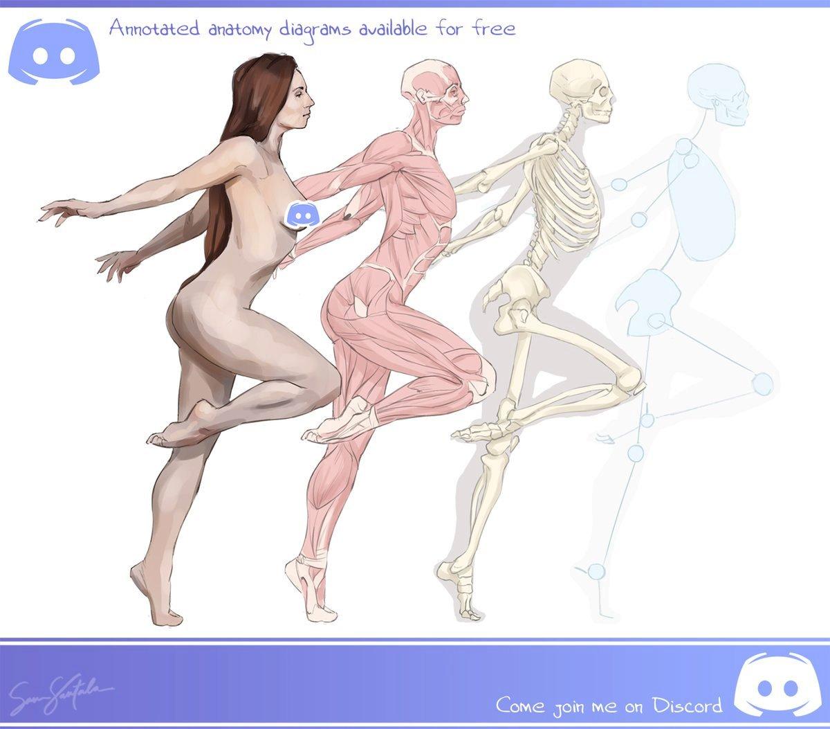 Anatomy For Art Anatomyforart Twitter