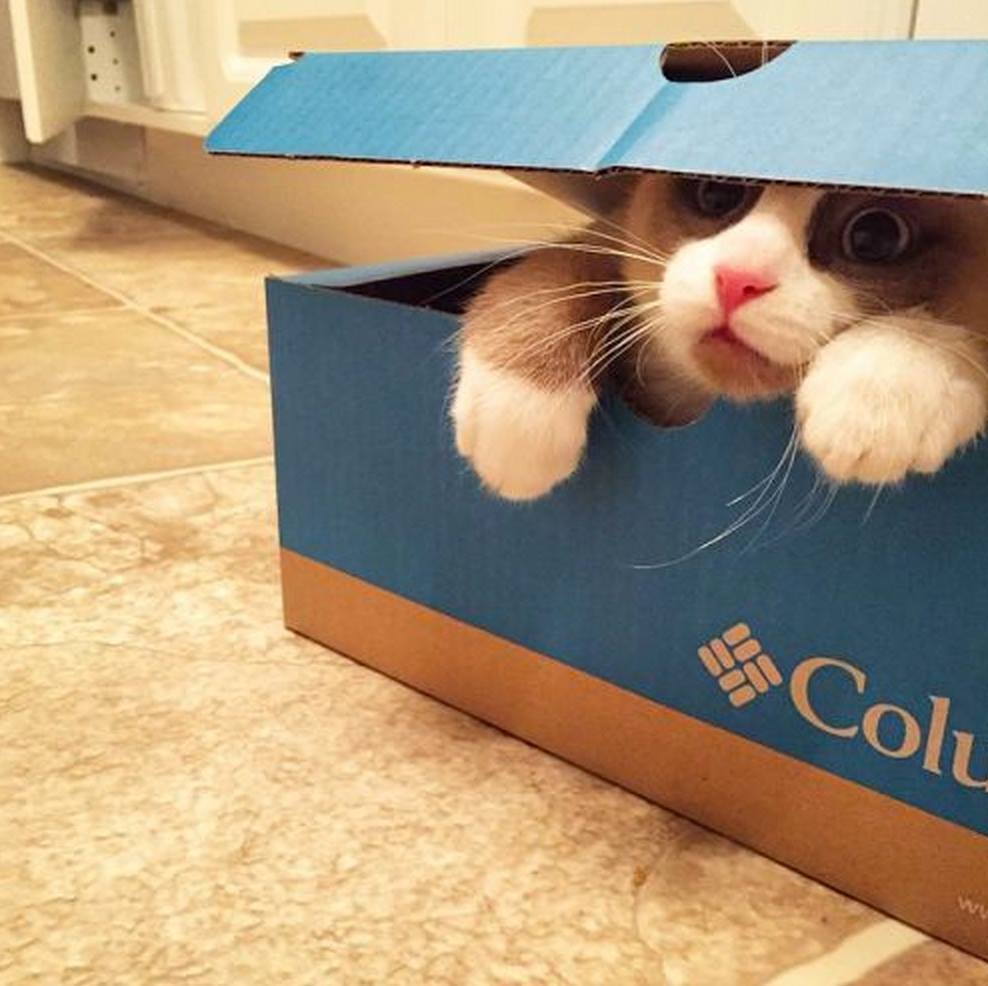 But the box did eat me!  [For more great cat pix >