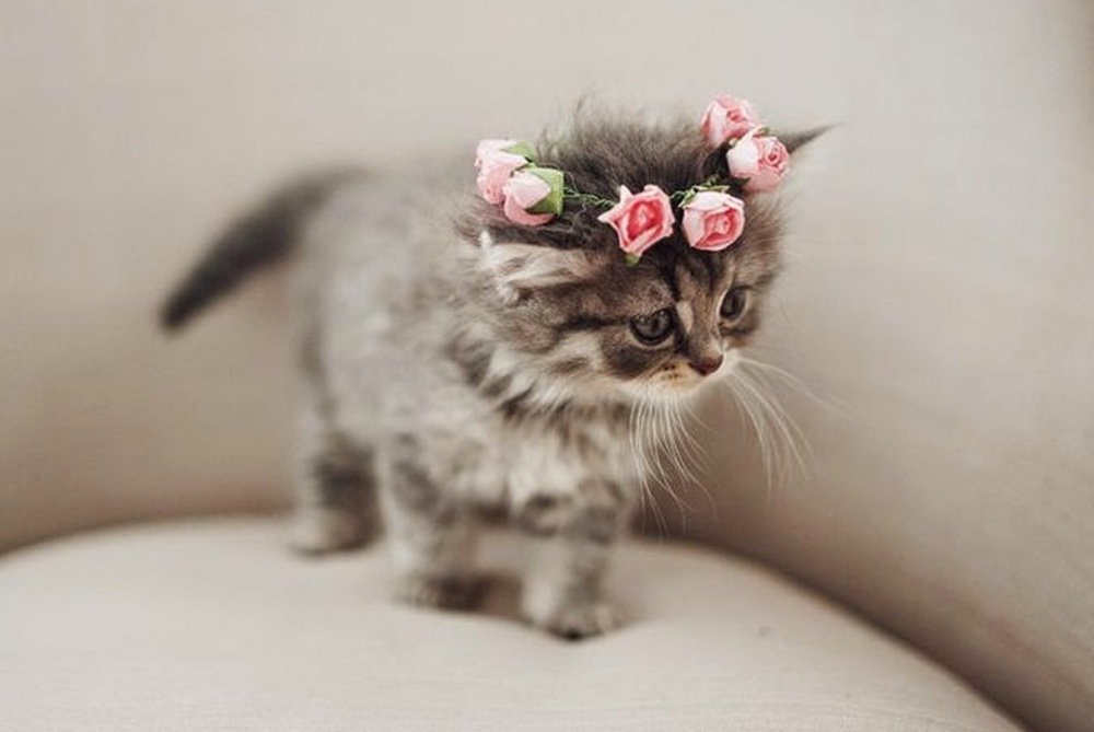 Flower crown for a pretty #kitty!