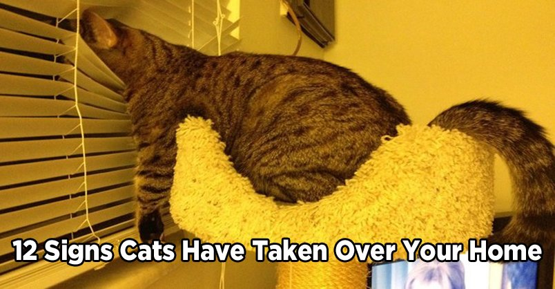 12 Signs Cats Have Taken Over Your Home! CLICK to see >