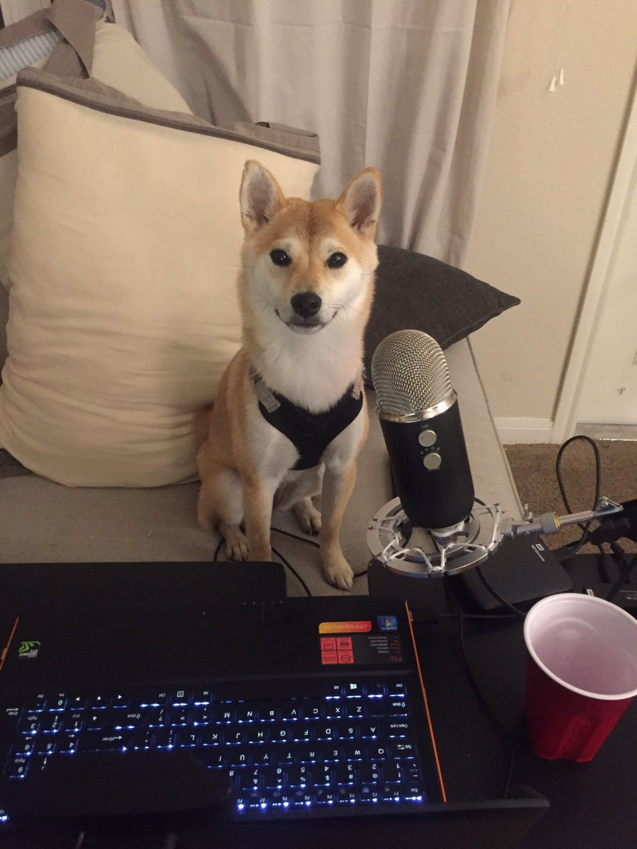 #NationalLoveYourPetDay   Charlie The @Twitch Streamer Doge https://t....