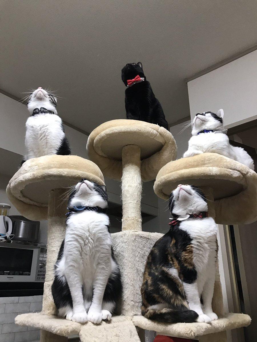 ゴキブリどもに告ぐ… 我が家に出たゴキブリはこの五猫神に24時間絶命するまで見つめられるのだ…  覚悟しな…