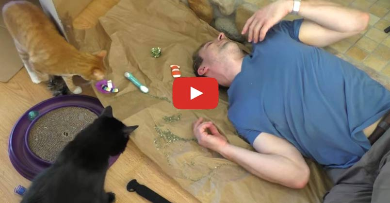 See what would happen if you were turned into a cat !! CLICK to watch >