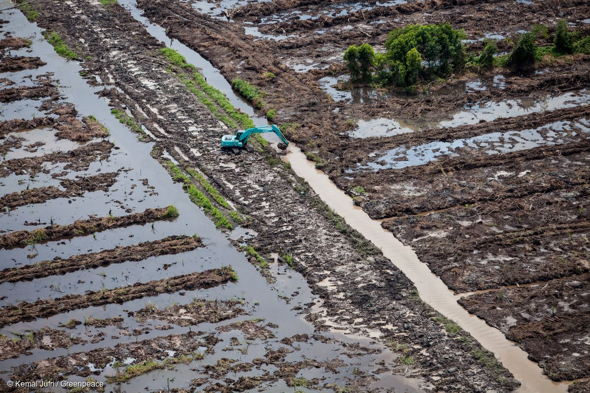 New HSBC 'no deforestation' policy first step towards sustainable palm...
