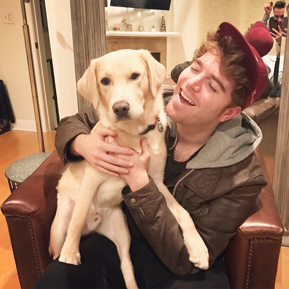 What Is Shane Dawson S Dog Name