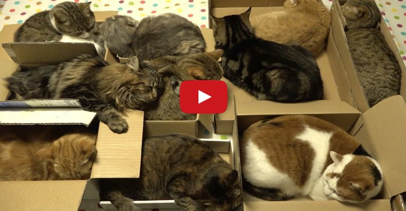 The 10 #Cats and Their Love of Boxes CLICK to watch >