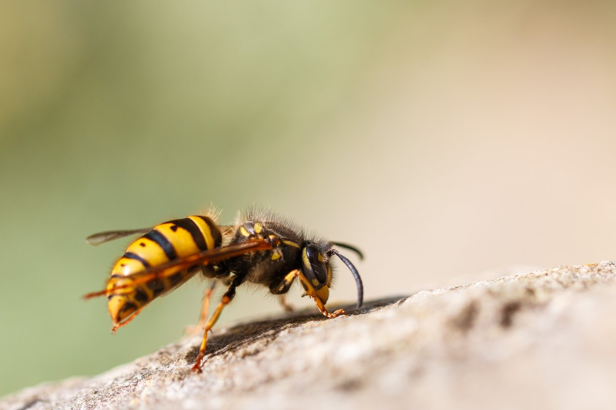 Snowdrops aren't the only sign of spring, as this queen wasp emerges from her hideout. Nicely done, @unkn0wnvariable #WexMondays https://t.co/YgbFStzZ2l