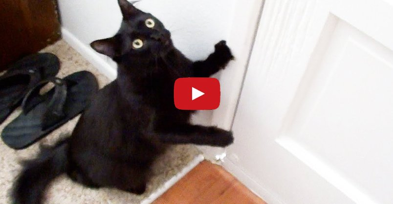 9 Reasons Black Cat Owners are Lucky! CLICK to watch >