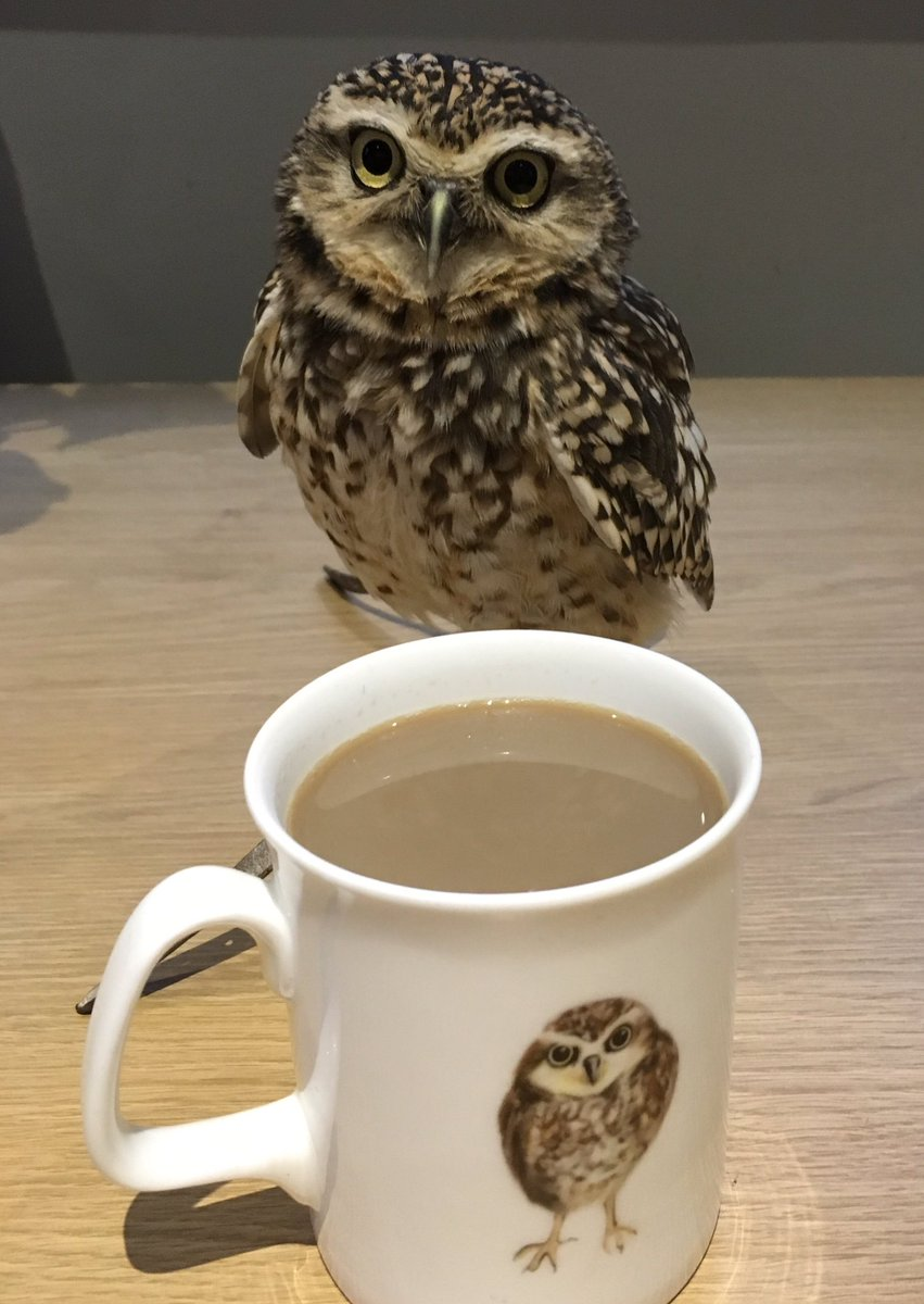 Tomorrow we are off to meet partners of veterans @suiteshotel  &amp; have a nice cuppa #merseyside #mentalhealth #ptsd #family #forces <br>http://pic.twitter.com/AIHoI85EuF