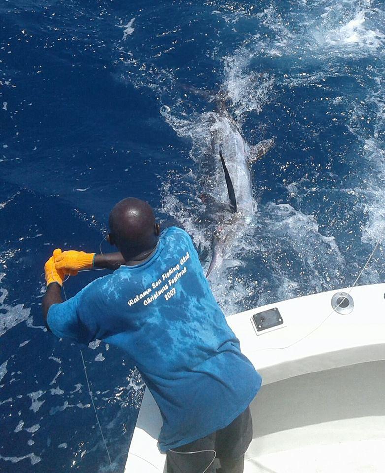 Watamu, Kenya - Tarka went 1-2 on Blue Marlin.