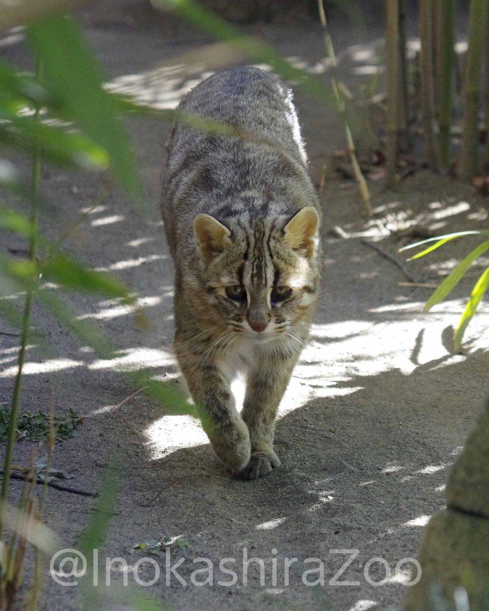 今日も1日ありがとうございました。  明日は2月22日、日本の猫の日です。 ノリさん、準備はよろしいですか? https://t.co/xU...