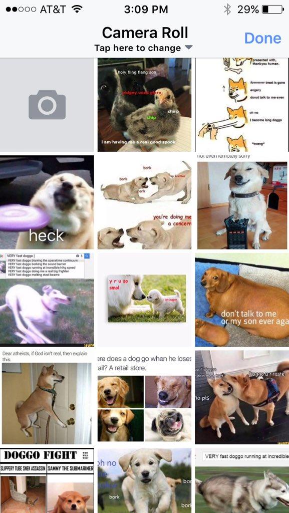 Dawko On Twitter Your Doggo Has Found A New Man At Razzbowski