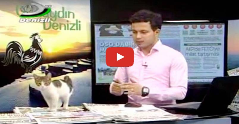 Stray Kitten Makes Surprise Appearance on Live TV and Finds Forever Home CLICK to watch >