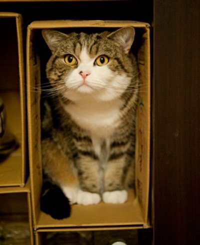 Loving this Maru pic...of course he\'s in a box!