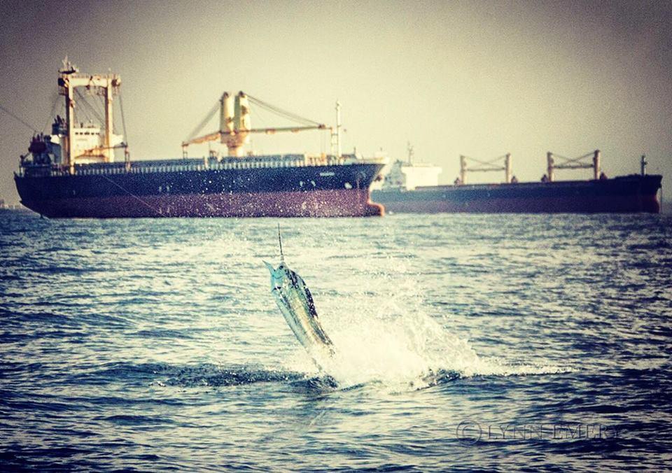Fujairah, UAE - Soolyman Sportfishing released a Sailfish.
