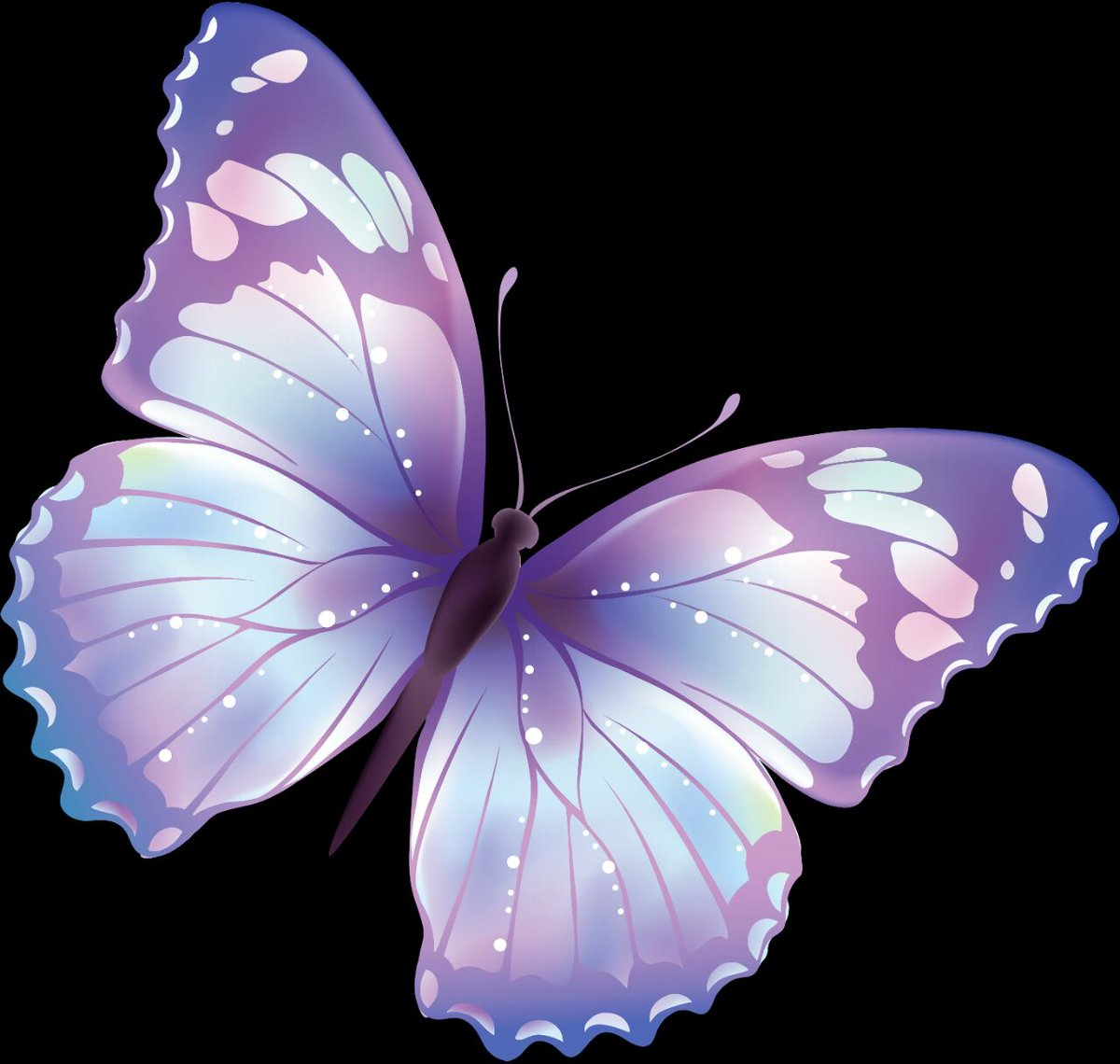 BUTTERFLY TRAVELS & TOUR