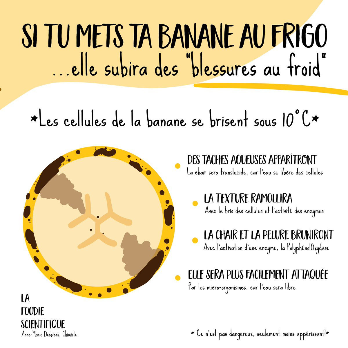 La banane préfère rester au chaud! #Science #Nutrition #Food #Foodie #foodbloggers<br>http://pic.twitter.com/0k7DhmYFro
