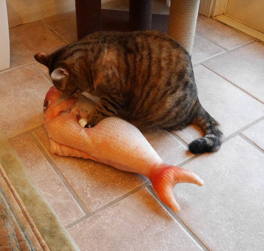 あれ?これは、、? ホンモノそっくりだよね🐟リアルプリントクッション各種▶︎https://t.co/XOdsy7gCUH  #猫の日 #に...