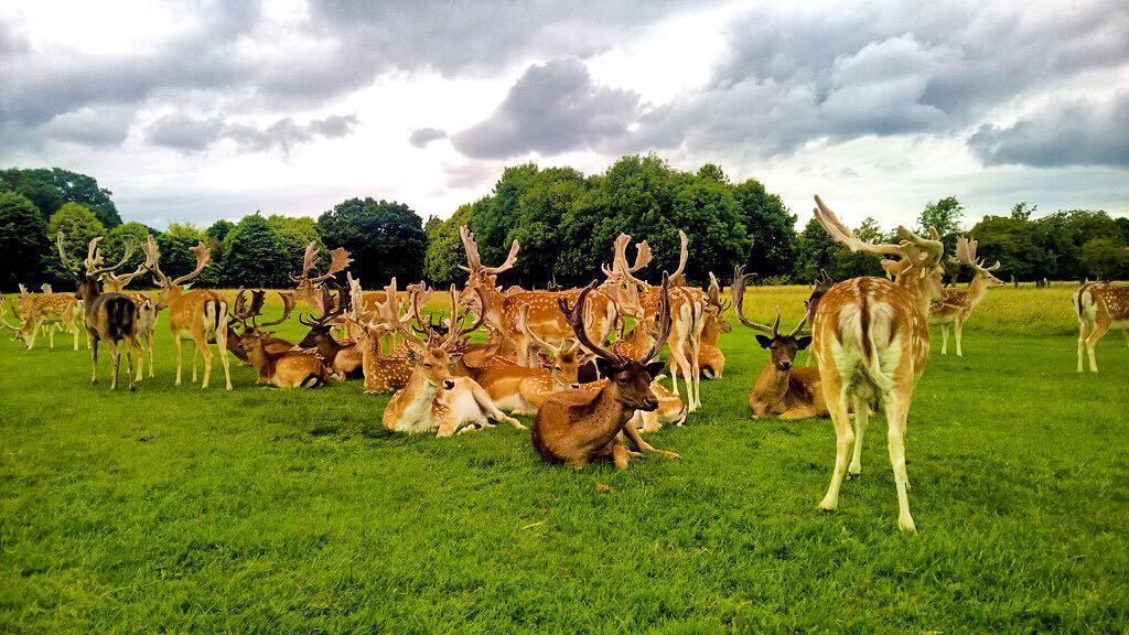 Ciervos en el Phoenix Park-  Alexandra College 2016 ⠀ ⠀ #WeLoveBS #inglés #idiomas #Dublin…  http:// ift.tt/2lmNlsI  &nbsp;  <br>http://pic.twitter.com/VYSLgCNp8q