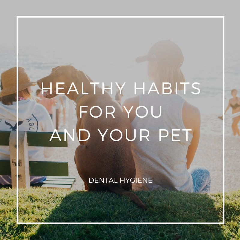 Dental hygiene is an important habit to maintain for both humans and our pets: https://t.co/JedHCjcevM #pethealth #petcare #PetDentalMonth