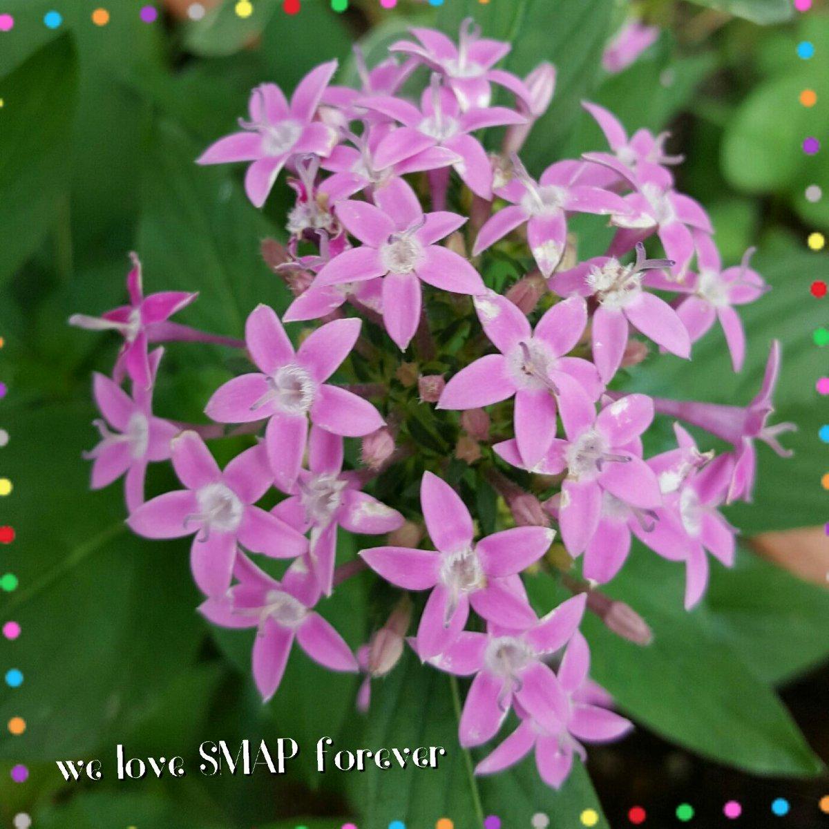 #SMAP #私の_世界に一つだけの花  おはようございますこのところ低浮上ですいつもごあいさつしていたみなさんのツイもRTすら出来ていなくて今週はこんな感じで行くと思いますが今日もみなさんよろしくお願いします<br>http://pic.twitter.com/a6djvVxVif