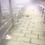 雲仙温泉に来た。熱で道が温かいのでネコがいっぱいくつろいでおります。 pic.twitter.com…