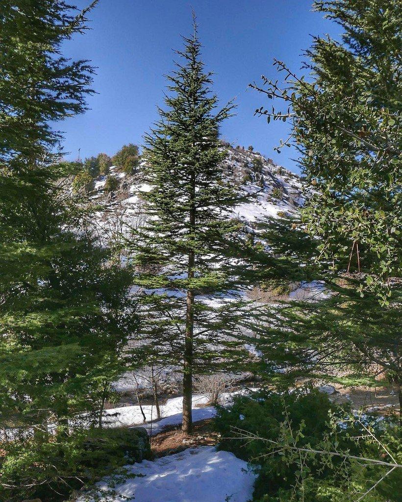 Mon beau sapin...  roi des forêts... #ehmej #cedars #mechwar #lebanon #village  http:// ift.tt/2lt8JN8  &nbsp;  <br>http://pic.twitter.com/SynJNxuvvm