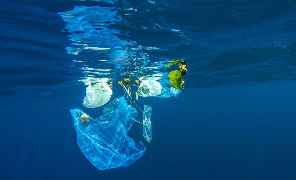 Lutter contre le plastique pour sauver les océans   http:// buff.ly/2lexTAh  &nbsp;    #Environnement #Pollution<br>http://pic.twitter.com/Tku24S3ZtY