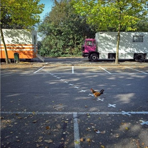 IMAGE: Chicken crossing border between Netherlands and Belgium