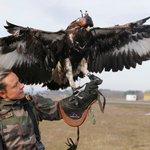フランス空軍の鷹匠がヤバイw軍が鷹匠を擁しているケースは近年では珍しいけど、昔は伝書鳩をキャプチャす…