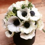 Enjoying these eye-catching white poppies in the shop today. #flowers #Poppy #peace https://t.co/HDIvcyP5QE