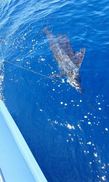 Quepos, CR - Caribsea went 6-9 on Sailfish.