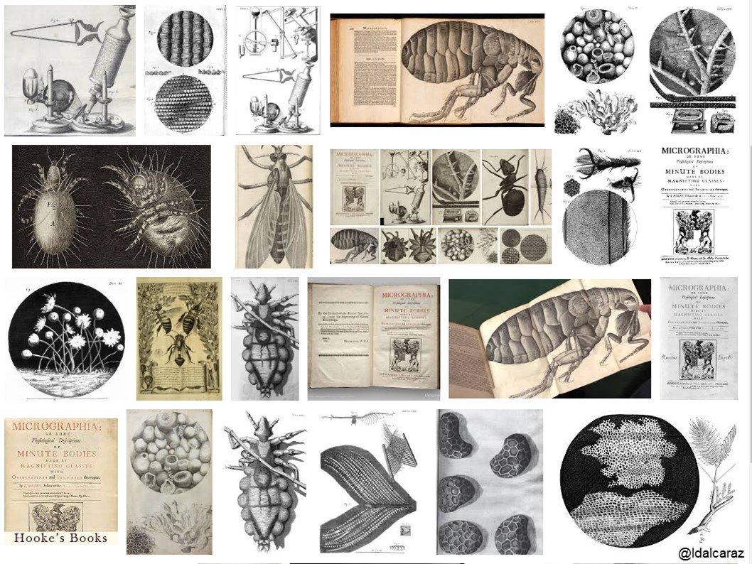 A los microbiólogos siempre les gusta dibujar. Ilustraciones del Micrographia de Hooke son fantásticas, quisiera dibujar así #microMOOCSEM2 https://t.co/0F9Fzy7h0V