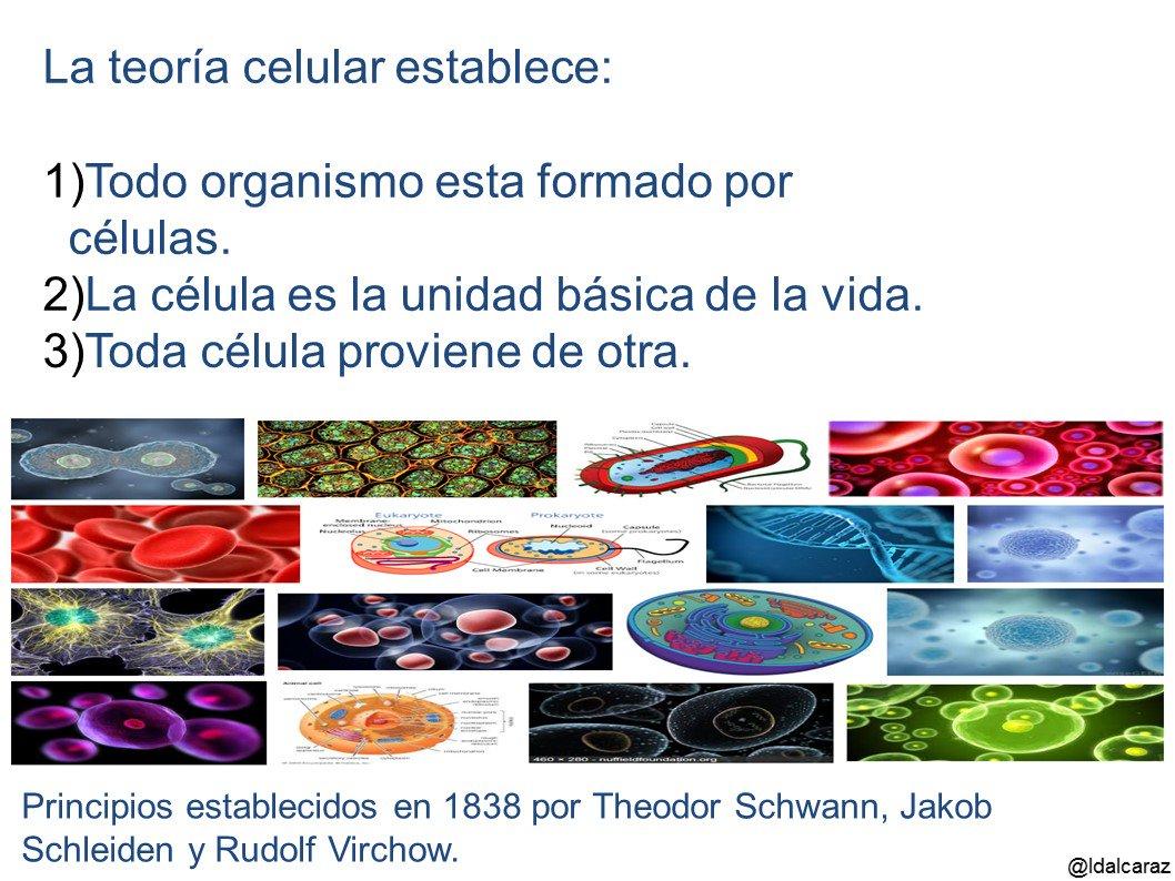 La teoría celular fue resultado de la biología comparada y la microbiología tuvo un papel protagónico en su establecimiento #microMOOCSEM2 https://t.co/JJ6kooCyaC