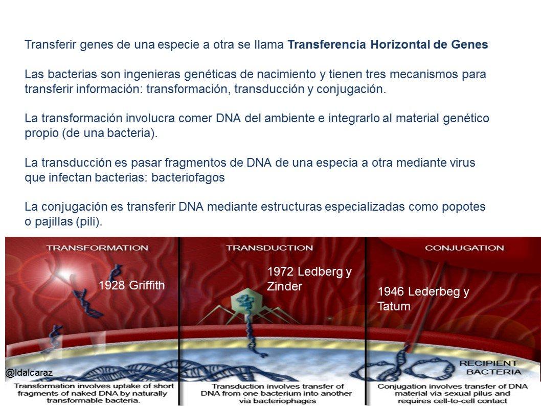 Las bacterias pueden transferir más allá de chismes (cotillear). Existe la transferencia horizontal de genes. #microMOOCSEM2 https://t.co/GkrSJzB9bq