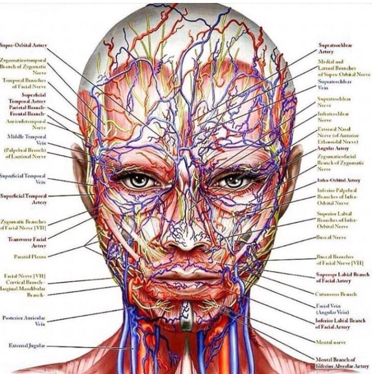 Dr Emma Deacon On Twitter Nerves Veins And Arteries Who Would
