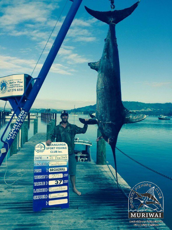 Muriwai, NZ - Bullet Proof weighed a 653 lbs. Swordfish.