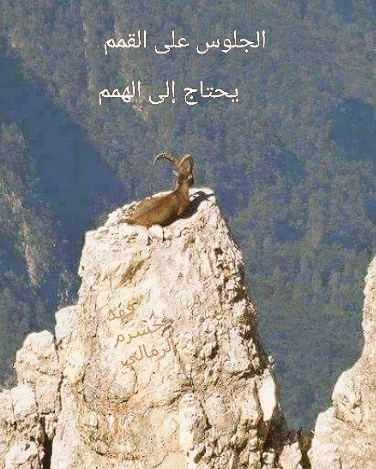 أمثال شعبية خليجية Amthaalsha3bya Twitter