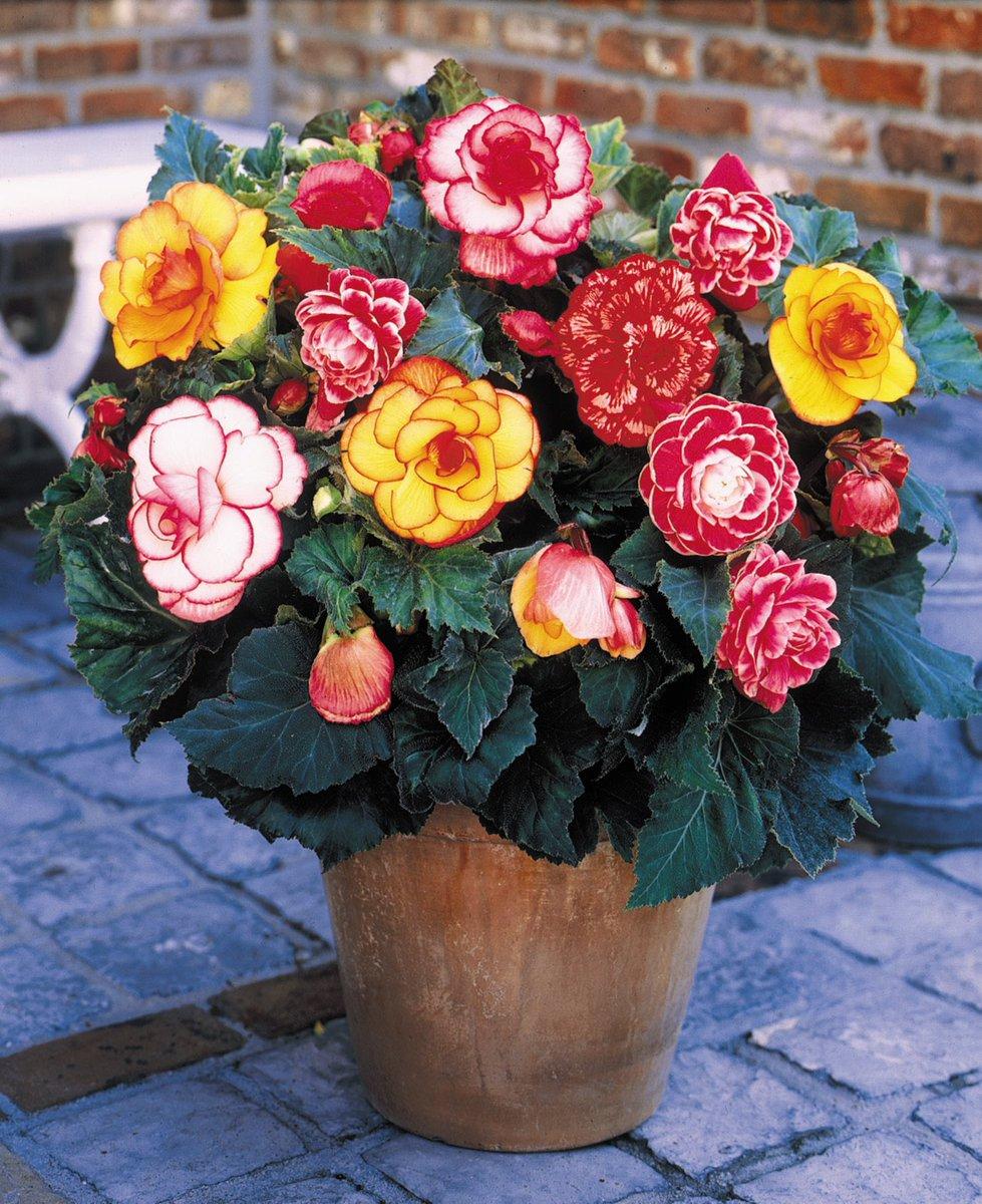 Bulgaria Flowers Български цветя и Рози