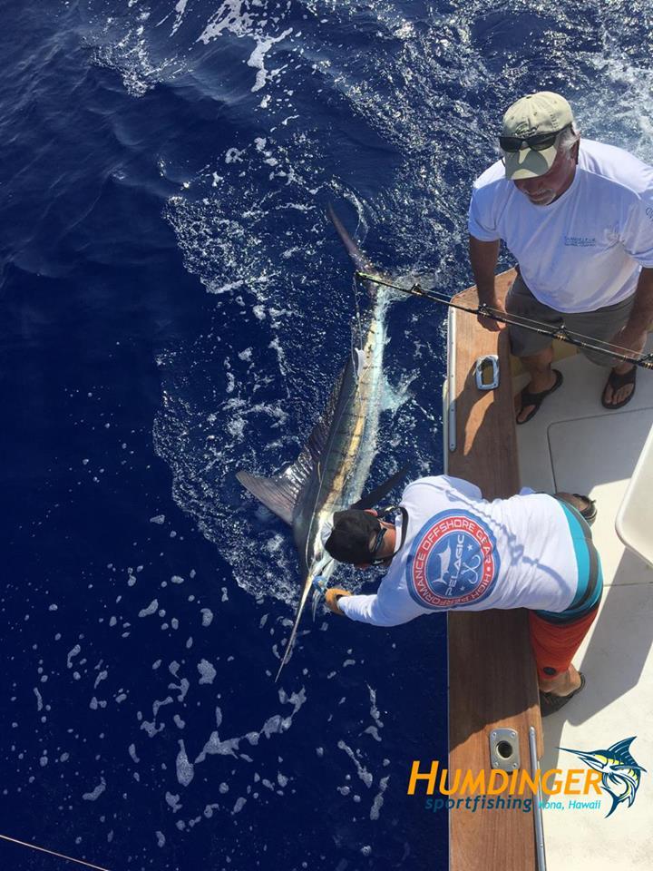Kona, HI - Humdinger released a Striped Marlin.