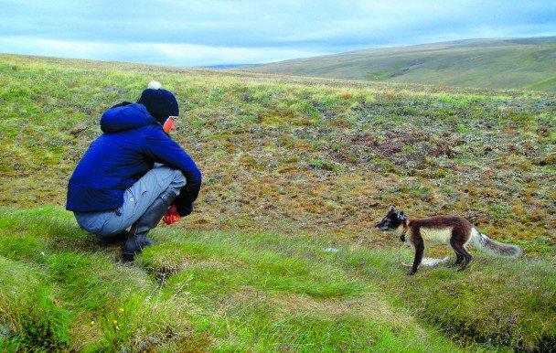 Une #doctorante s'est rendue en #Arctique pour traquer le #renard arctique et étudier sa place dans l'écosystème :  http:// quartierlibre.ca/traquer-le-ren ard-arctique/ &nbsp; … <br>http://pic.twitter.com/I3aaIznqhW